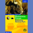 Białowieża Forest. Travel guide
